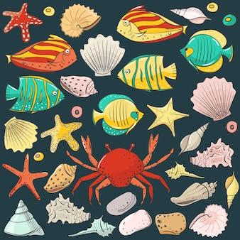 Colección con concha estrella de mar piedra de pescado conchas exóticas de colores