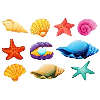 Colección de conchas a color