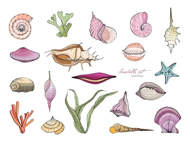 Colección de conchas marinas dibujadas a mano.