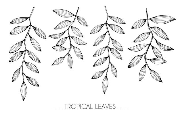 Colección conjunto de hojas tropicales dibujo ilustración.