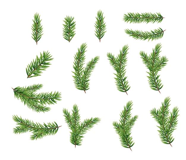 Colección conjunto de ramas de abeto realistas para árbol de navidad, pino. ilustración vectorial eps10