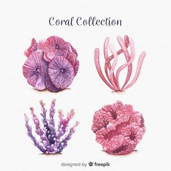 Colección de corales en acuarela