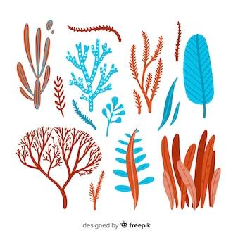 Colección de corales dibujados a mano