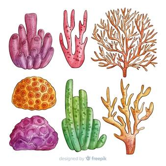 Colección de corales