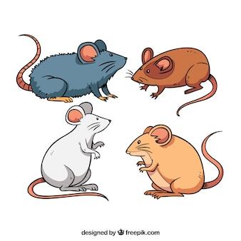 Colección de cuatro ratones domésticos