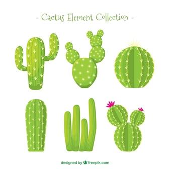 Colección de cactus con estilo natural