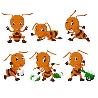Colección de dibujos animados de hormigas