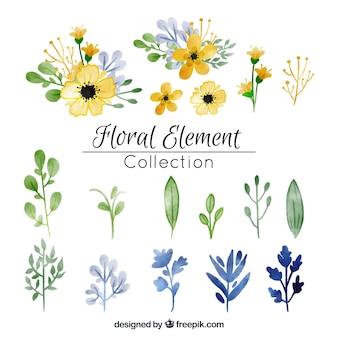 Colección de elementos florales en acuarela