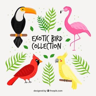 Colección de pájaros exóticos hechos a mano