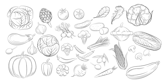 Colección de dibujo de doodle de verduras. menú de restaurante de productos agrícolas de colección de estilo grabado, etiqueta de mercado. iconos de estilo de dibujo vintage establecen verduras en negro aislado sobre fondo blanco.