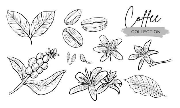 Colección de dibujo de plantas y flores de café realista