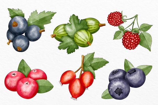 Colección de diferentes frutas ilustradas.