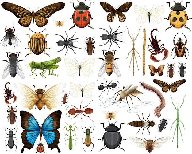 Colección de diferentes insectos aislado sobre fondo blanco.