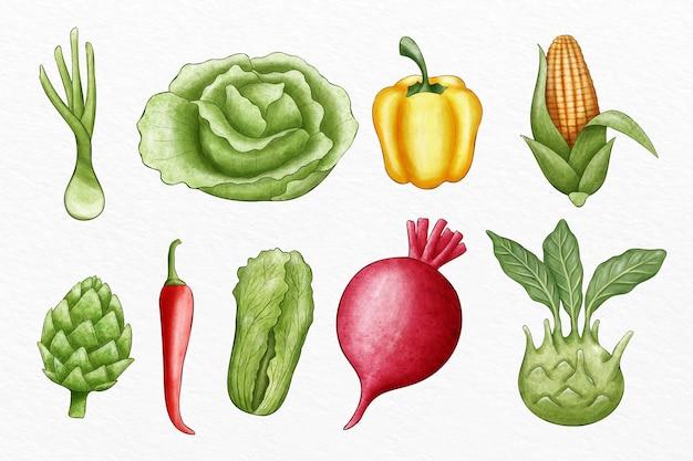 Colección de diferentes verduras ilustradas.