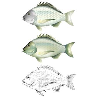 Colección de diseños de peces