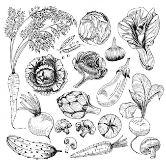 Colección de diseños de vegetales