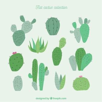 Colección divertida de cactus modernos