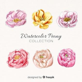 Colección de elegantes flores peonía de acuarela