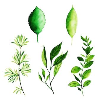 Colección de elementos de acuarela spring leaves elements