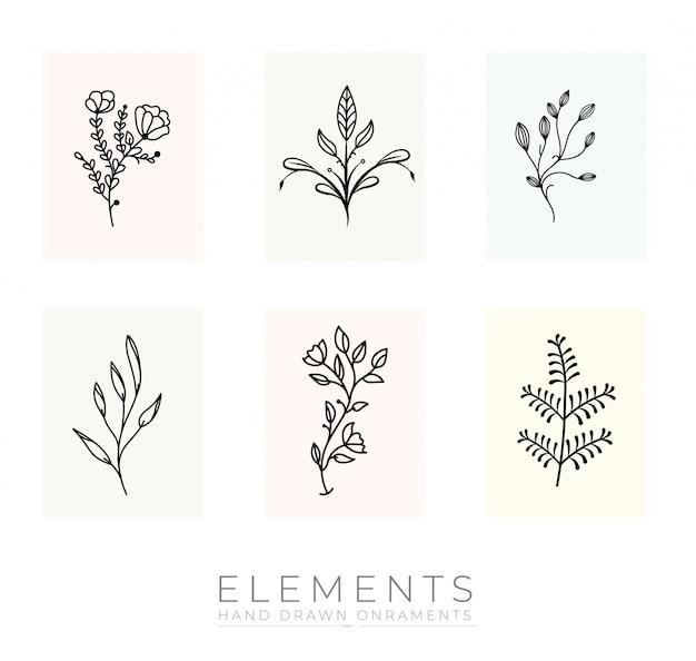 Colección de elementos botánicos dibujados a mano
