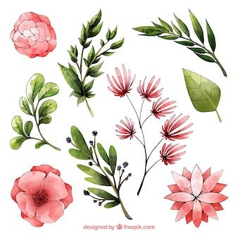 Colección de elementos florales de acuarela