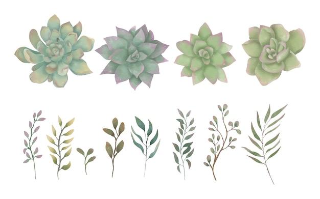Colección de elementos de flores suculentas en acuarela