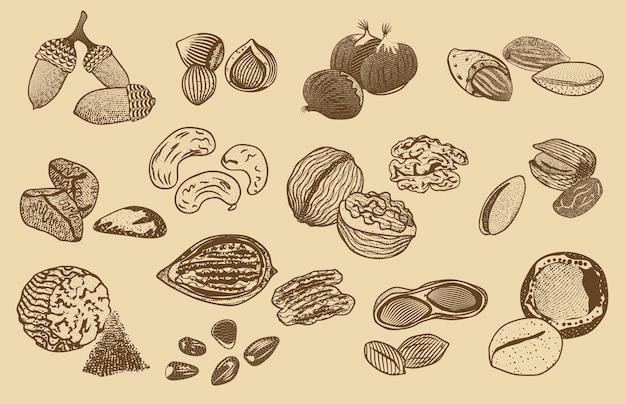 Colección de elementos de frutos secos orgánicos naturales