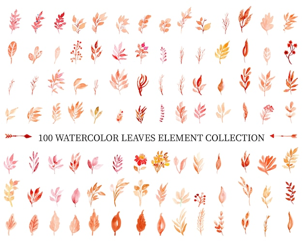 Colección de elementos de hojas de acuarela