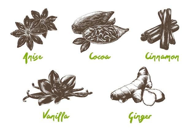 Colección de especias y frijoles orgánicos de estilo grabado bocetos monocromos dibujados a mano aislados sobre fondo blanco