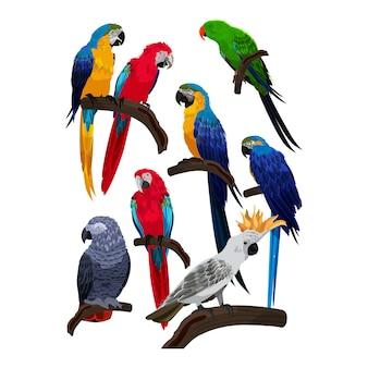 Colección de especies de aves loro plantilla vector