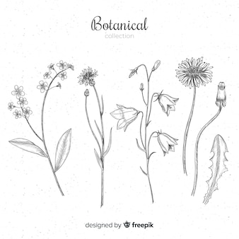 Colección de especies botánicas e hierbas dibujadas a mano