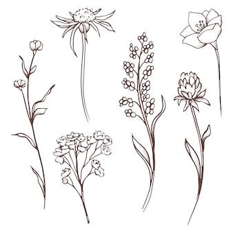 Colección floral conjunto dibujado a mano flores y hojas. composición floreciente.