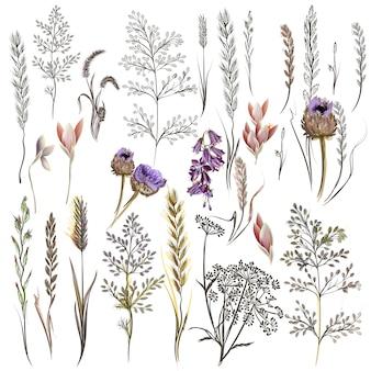 Colección de flores bonitas