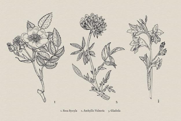 Colección de flores de botánica vintage dibujada a mano realista