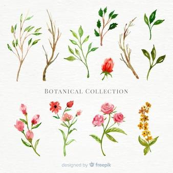 Colección de flores botánicas en acuarela