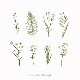 Colección de flores botánicas dibujadas a mano realista