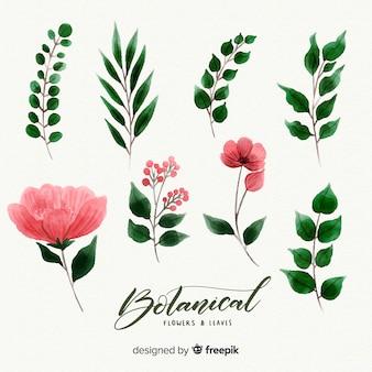 Colección flores botánicas dibujado a mano