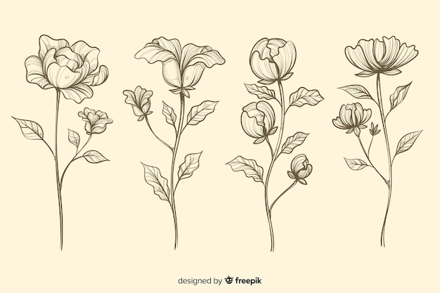 Colección de flores botánicas realistas dibujadas a mano