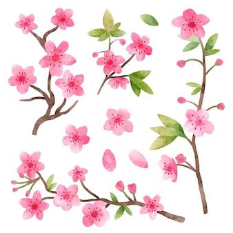 Colección de flores de cerezo en acuarela