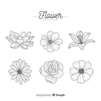 Colección flores dibujada a mano