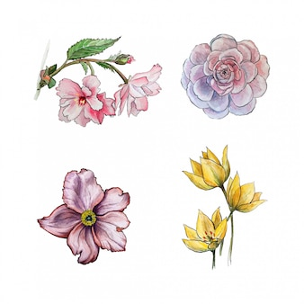Colección de flores dibujadas a mano en acuarela.