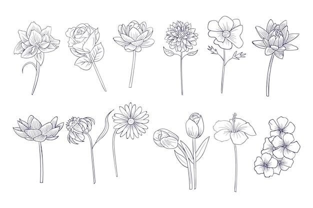 Colección flores dibujadas a mano