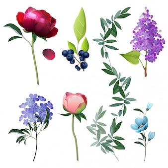 Colección de flores elementos florales botánicos decorativos hojas rústicas dibujos animados