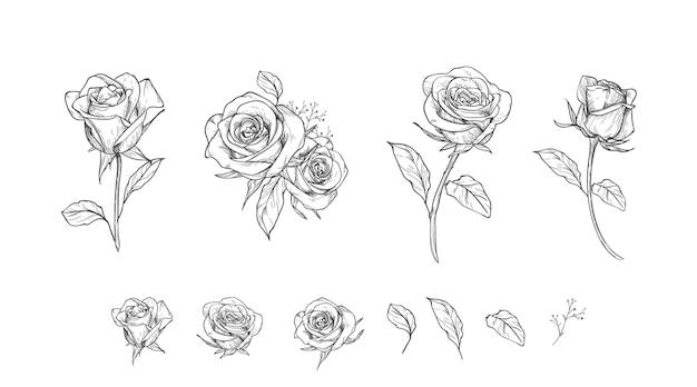 Colección de flores grabadas dibujadas a mano