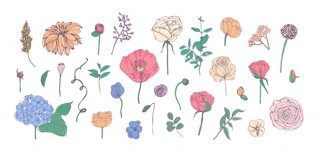 Colección de flores, hojas y capullos de jardín dibujados a mano aislados en blanco