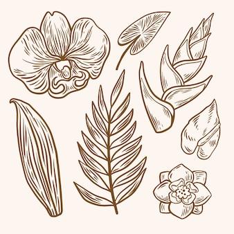 Colección de flores y hojas de contorno tropical