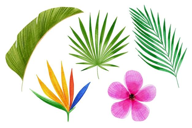 Colección de flores y hojas tropicales.