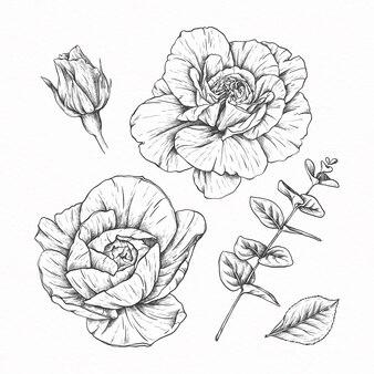Colección de flores de ilustración dibujada a mano