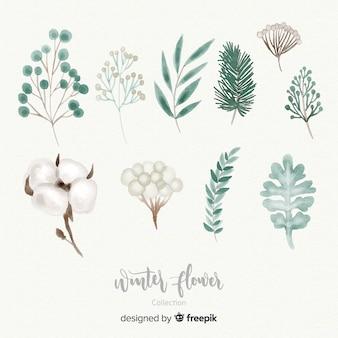 Colección de flores de invierno en acuarela