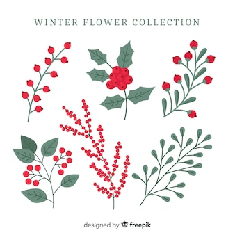 Colección de flores de invierno